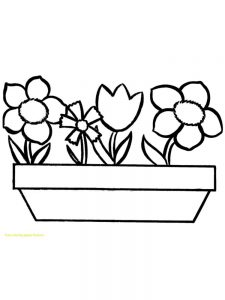 A Flower Coloring Pages