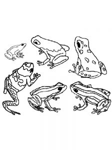 Amazing Frog Coloring Pages
