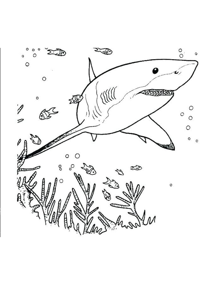 Angry Shark Coloring Pages