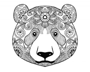 Animal Coloring Pages for Adults Bear Face