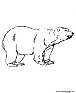 Animal Polar Bear Color Pages To Print