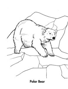Animal polar bear coloring pages