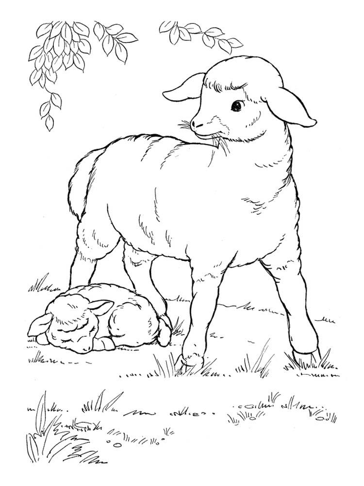 Baba Black Sheep Coloring Pages