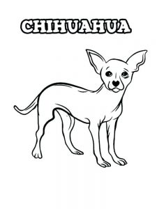 Baby Chihuahua Coloring Pages