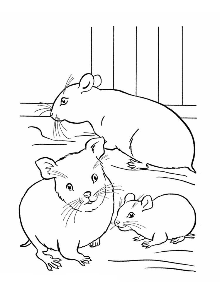 Baby Hamster Coloring Pages