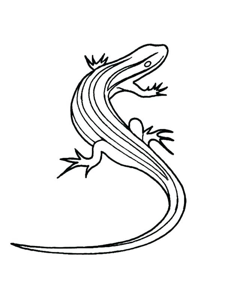 Baby Lizard Coloring Pages