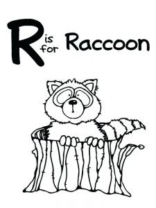 Baby Raccoon Coloring Page