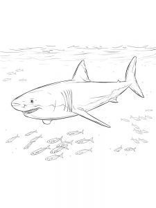 Baby Shark Coloring Pages Free Printable