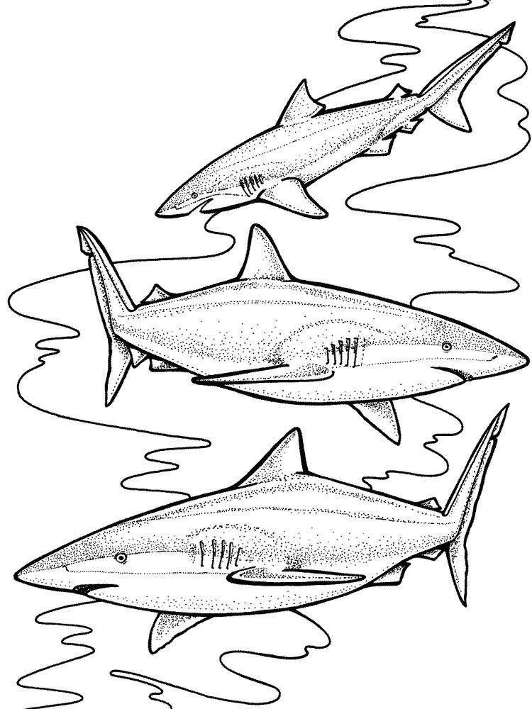 Baby Shark Coloring Pages To Print