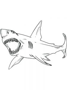 Baby Shark Song Coloring Pages