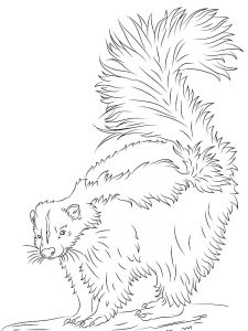 Baby Skunk Coloring Pages