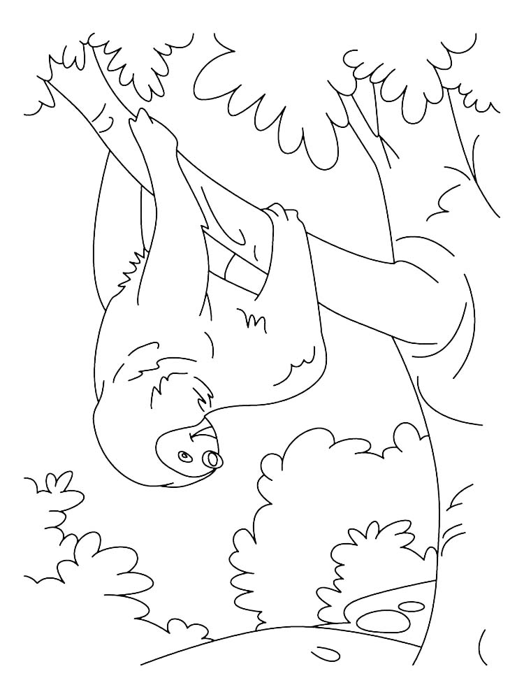 Baby Sloth Coloring Page