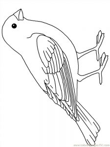 Backyard Bird Coloring Pages