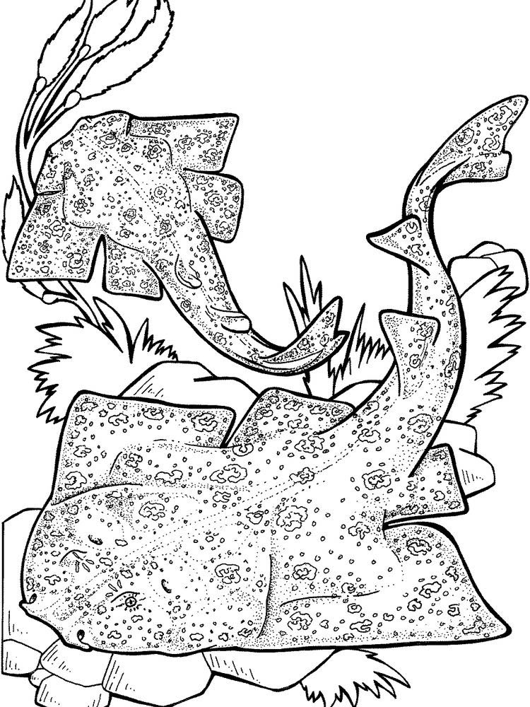 Basking Shark Coloring Pages
