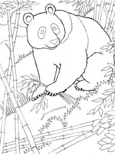 Beanie Boo Panda Coloring Pages