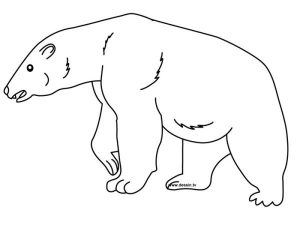 Big polar bear coloring pages