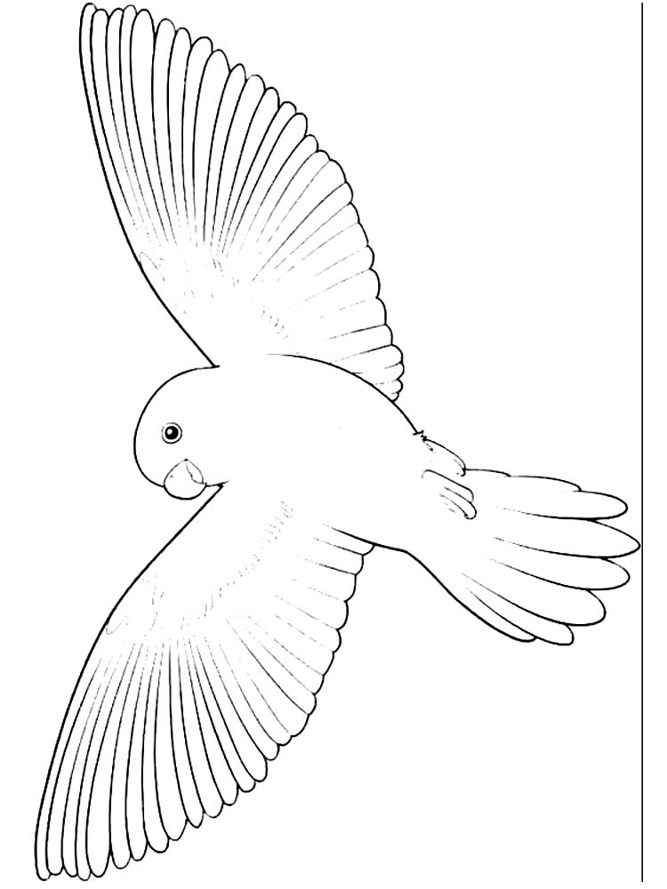 Bird Alphabet Coloring Pages