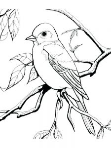 Bird And Nest Coloring Pages