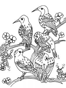 Bird Coloring Pages For Kindergarten