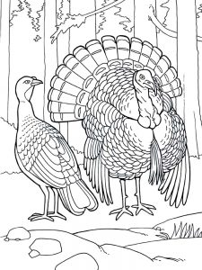 Bird Coloring Pages Simple