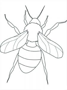 Birds And Insects Coloring Pages