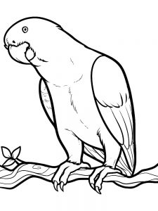 Birds Colouring Pages