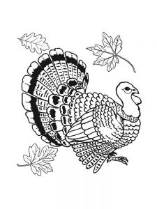 Black And White Turkey Coloring Pages