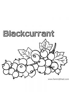 Blackcurrant coloring page print