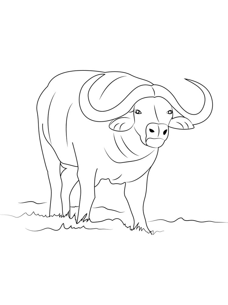 Buffalo Coloring Pages For Adults