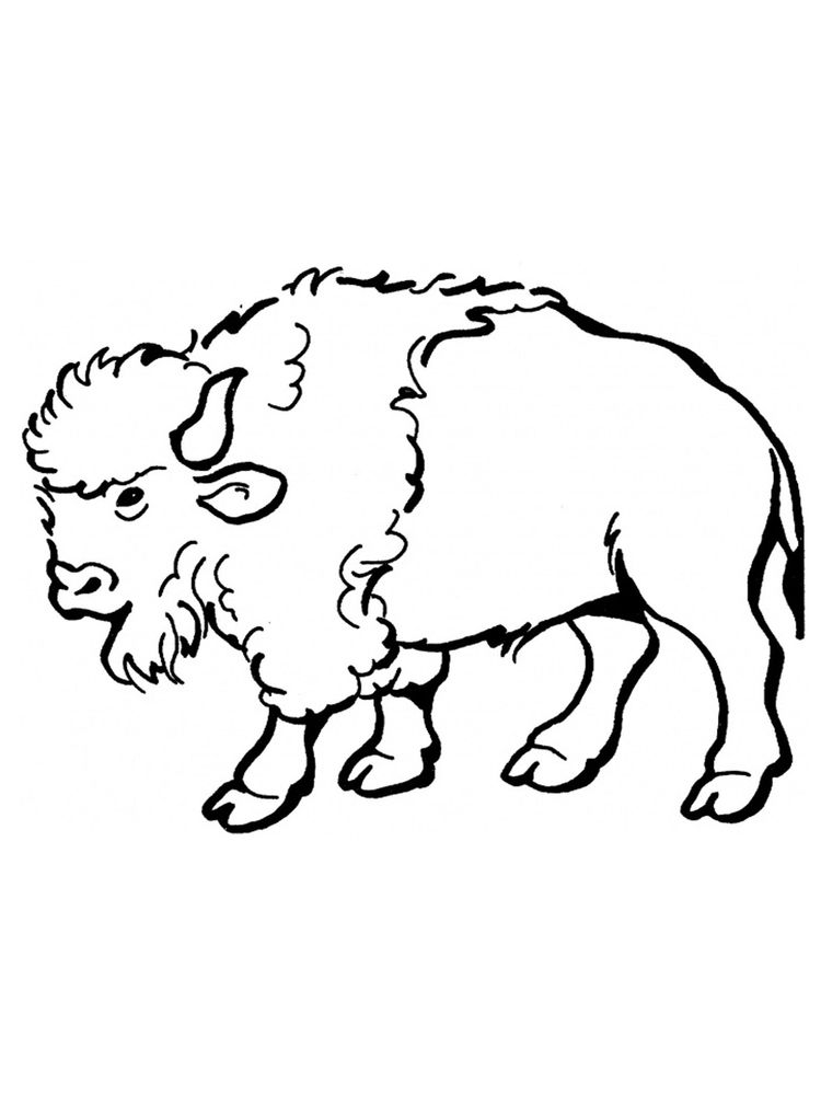 Buffalo Coloring Pages For Free