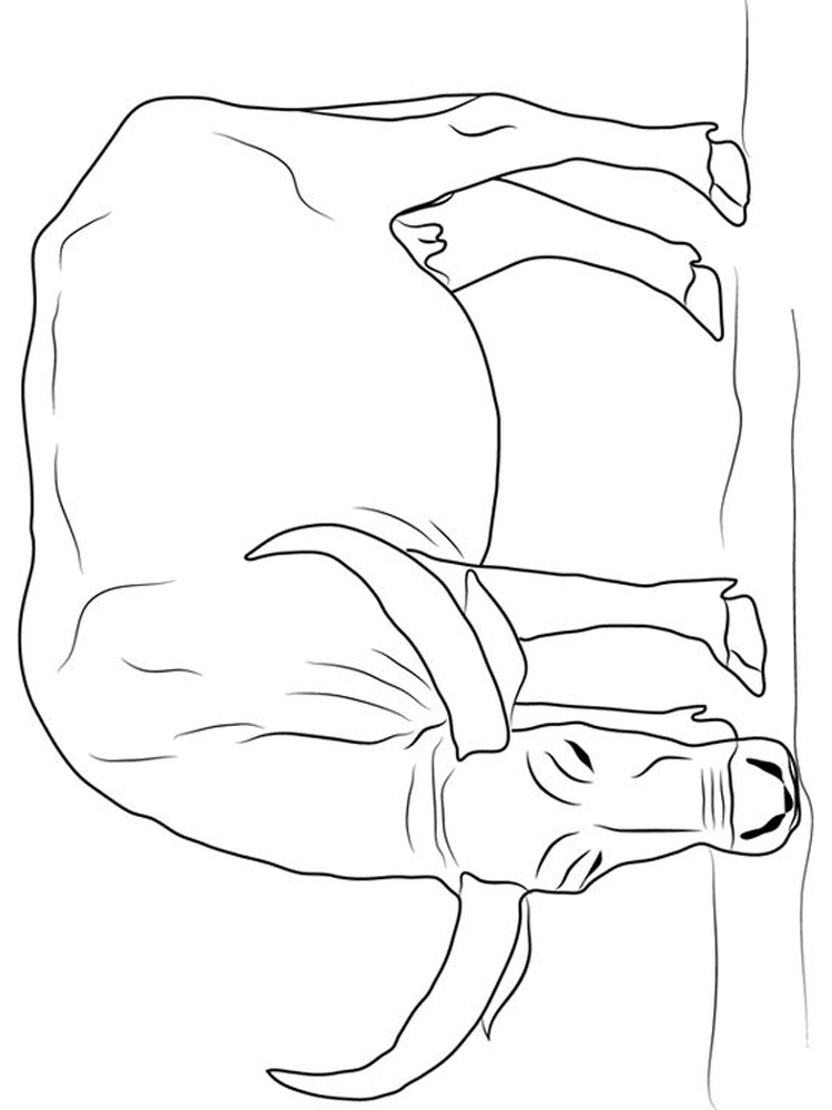 Buffalo Coloring Pages Kindergarten