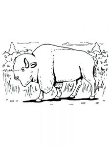 Buffalo Sabers Coloring Pages