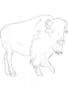 Buffalo Sabres Coloring Pages