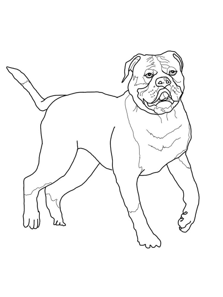 Bulldog Coloring Pages Print