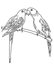 Cartoon Parrot Coloring Pages