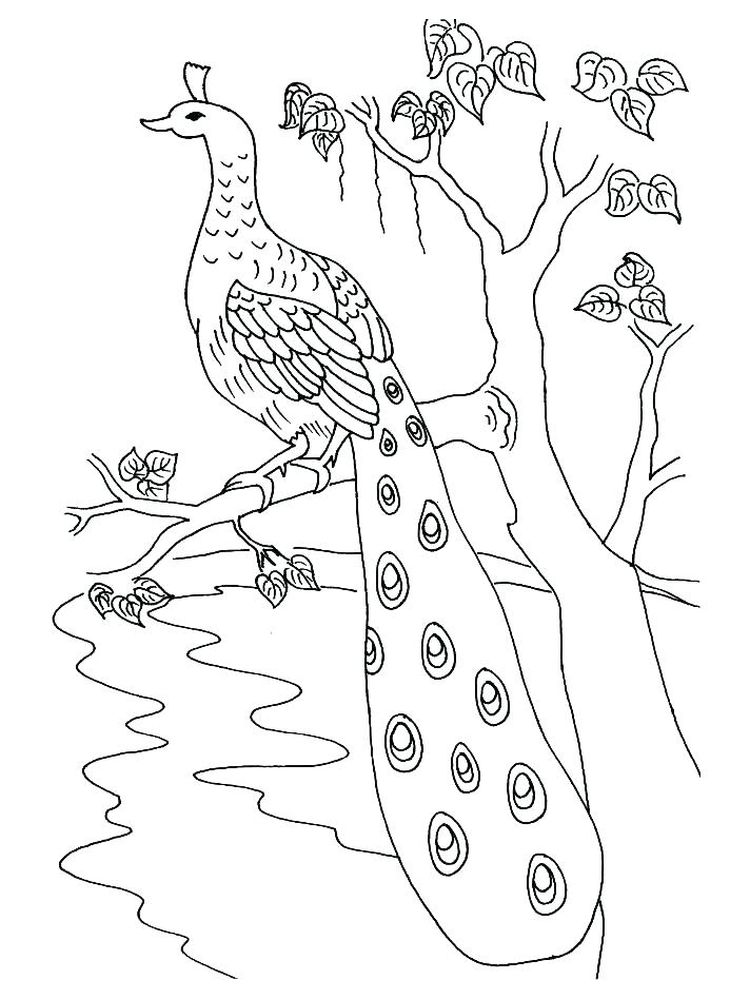 Cartoon Peacock Coloring Pages