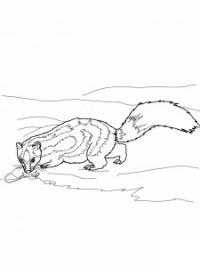 Cartoon Skunk Coloring Page