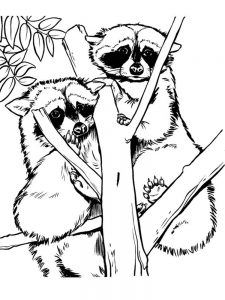 Chester Racoon Coloring Page