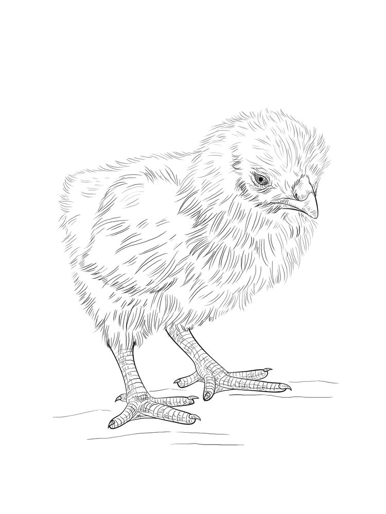 Chick Coloring Pages For Toddler