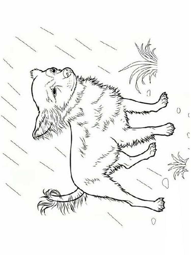 Chihuahua Coloring Pages Printable