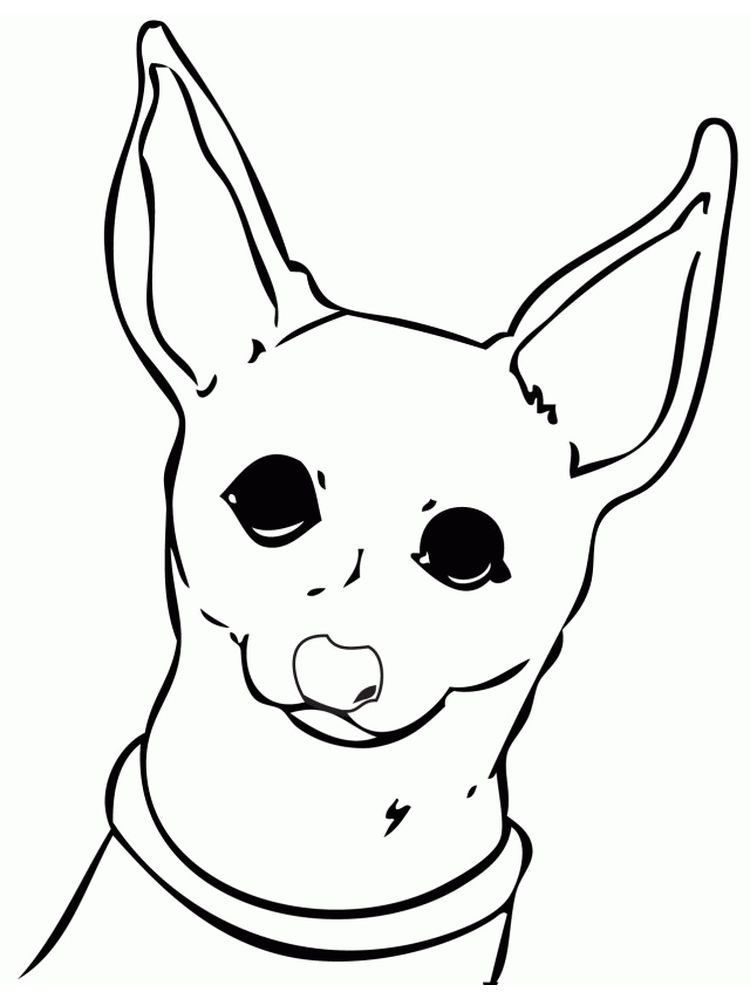 Chihuahua Puppy Coloring Pages