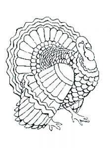 Christmas Turkey Coloring Pages