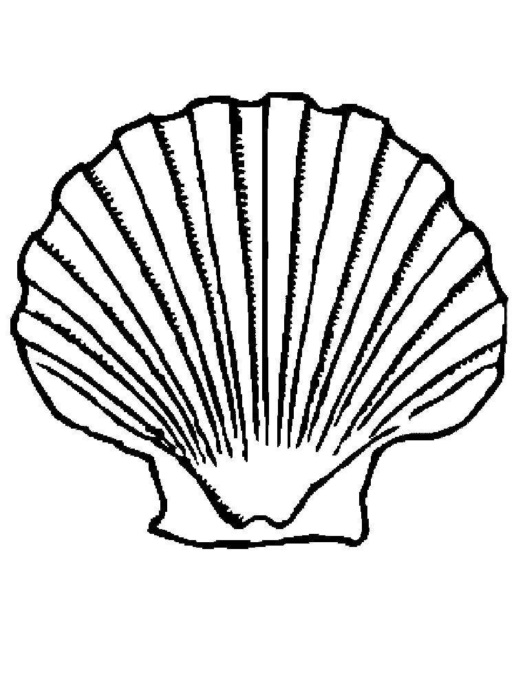 Clam Shell Coloring Page