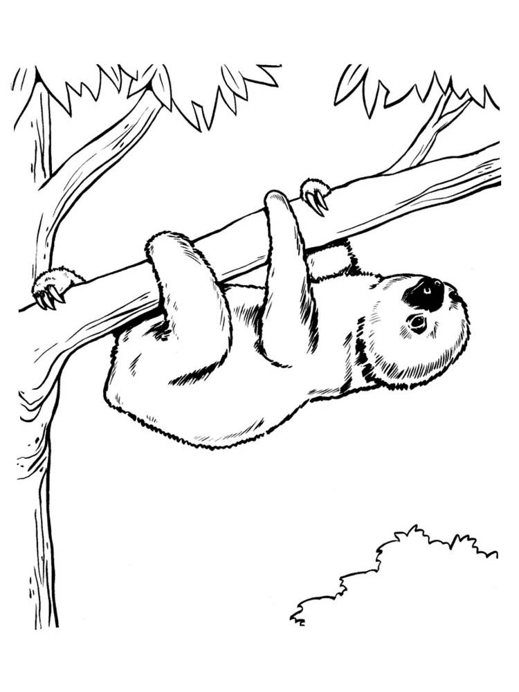 Coloring Page Of A Sloth
