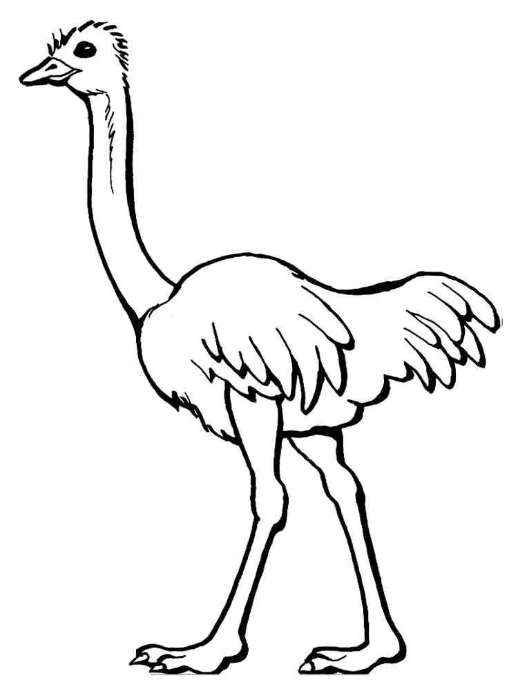 Coloring Page Of Ostrich