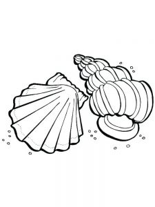 Coloring Page Of Sea Shell