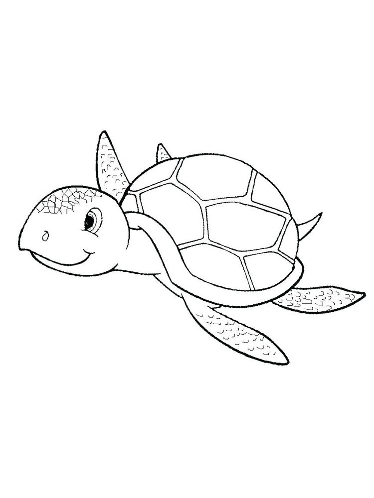 Coloring Page Of Shells