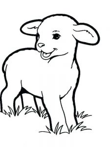 Coloring Pages Boy With Sheep