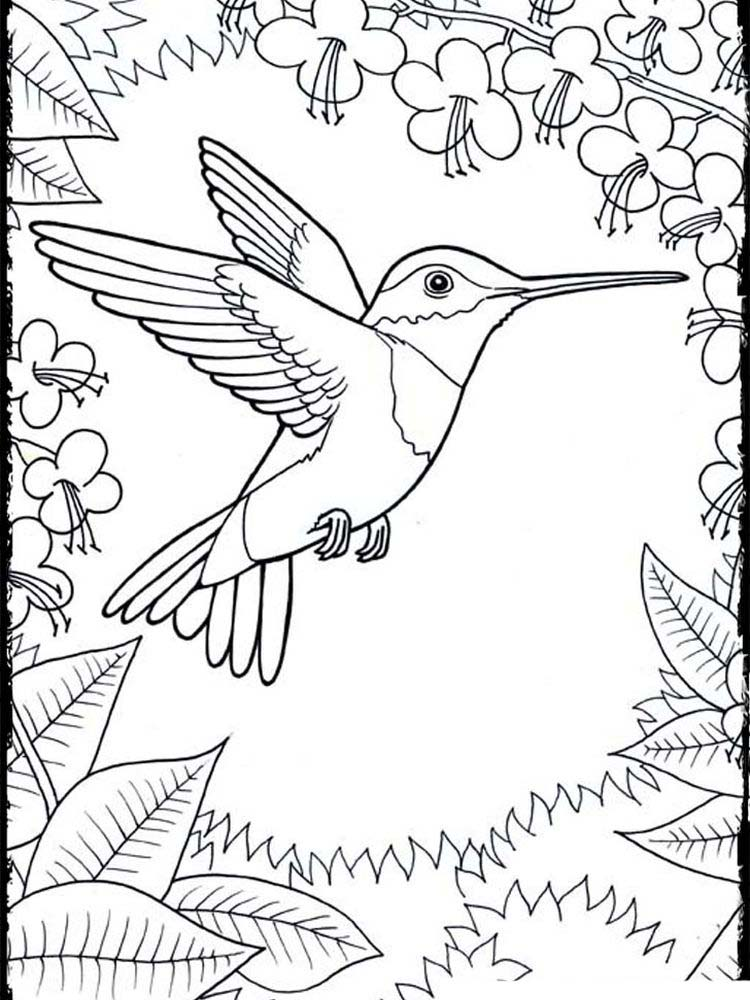 Coloring Pages For Hummingbirds