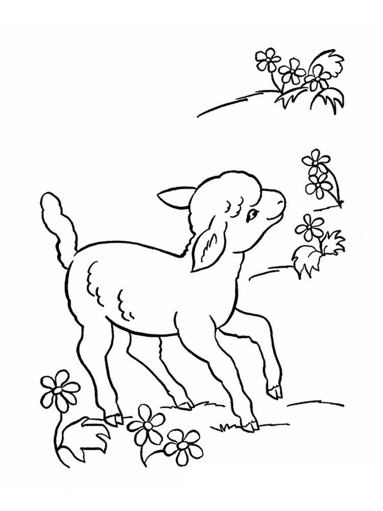 Coloring Pages For The Lost Sheep Parable